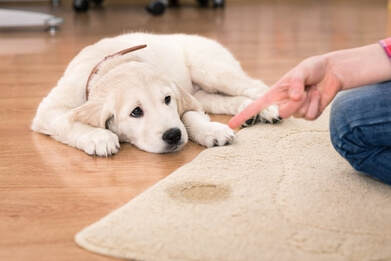 puppy urinated on rug call the professional pet stain removers